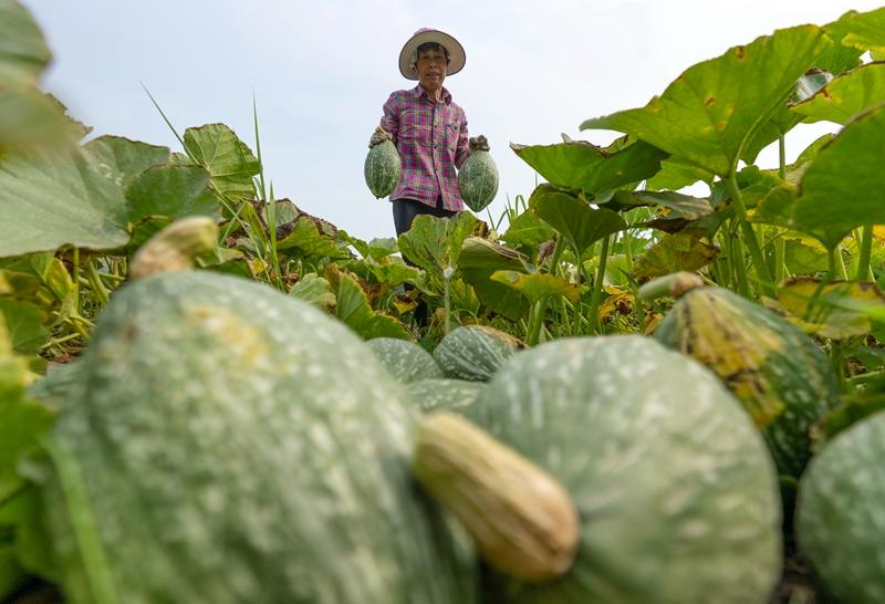 河北唐山:发展订单农业促增收